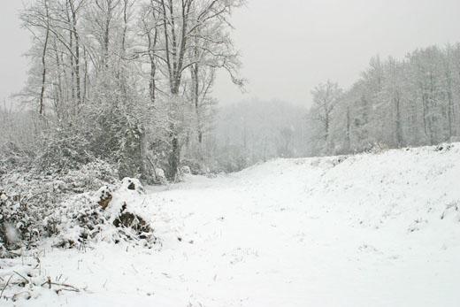 Snowing © LFB